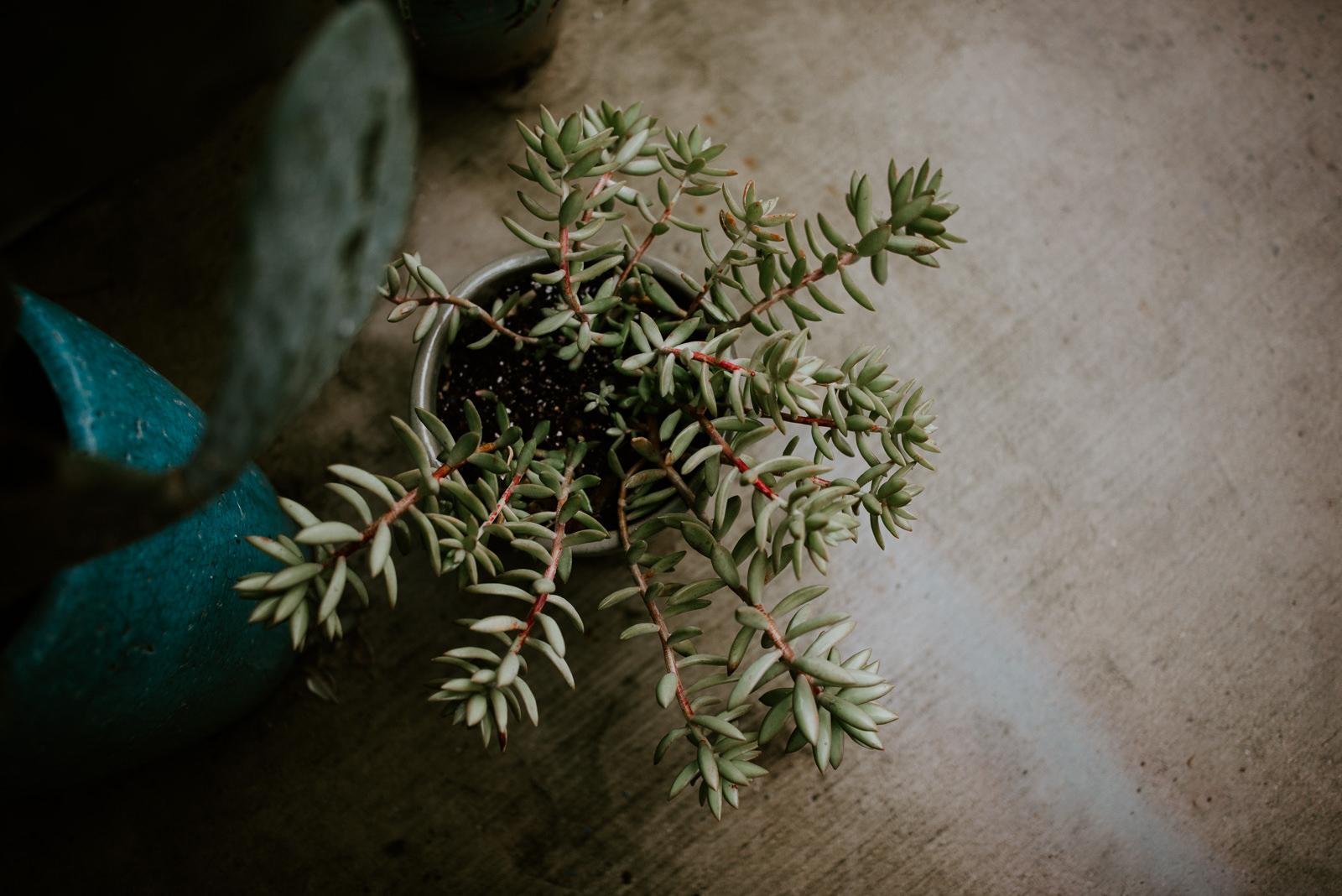 plant at wedding