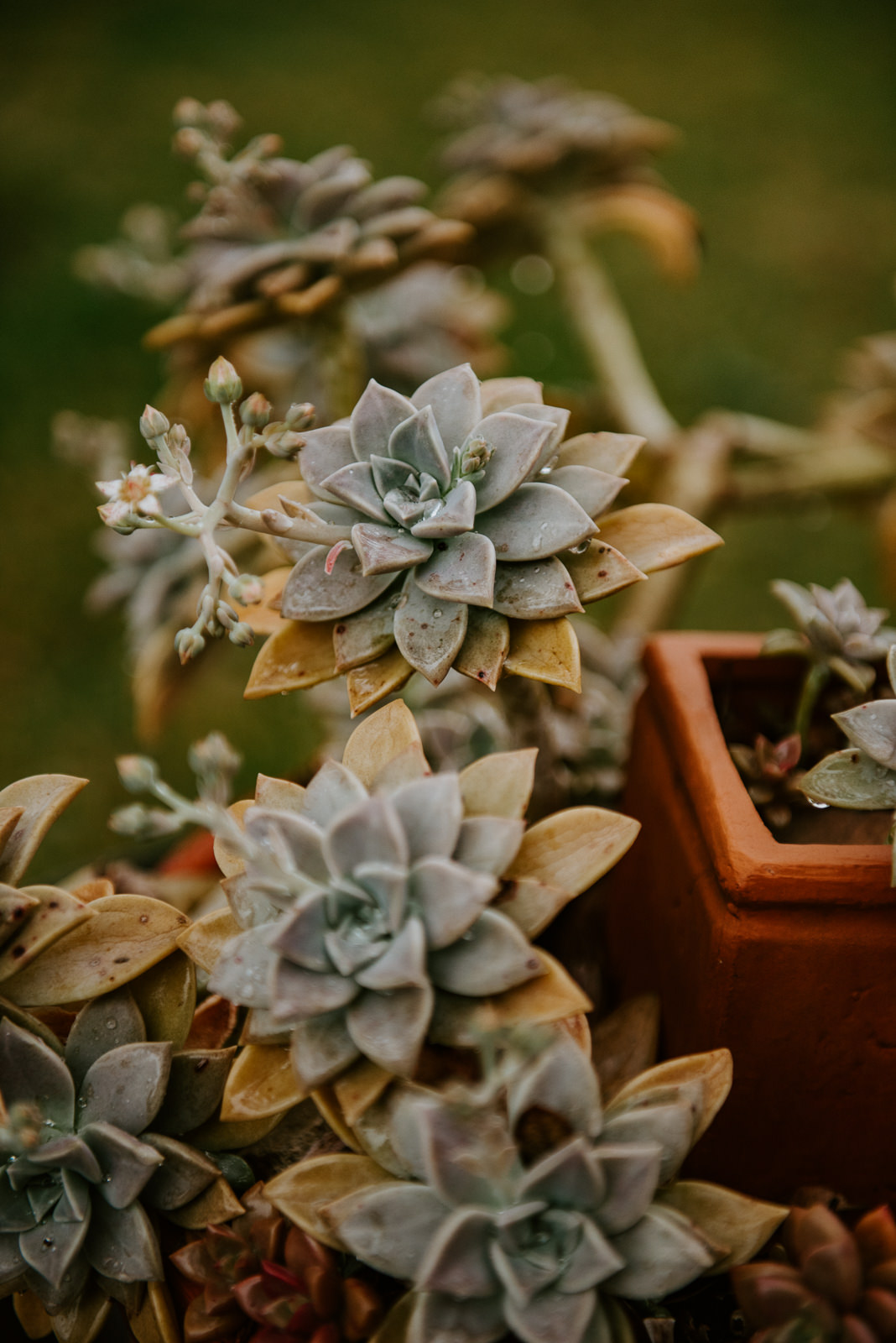 succulent decorations at hill country wedding