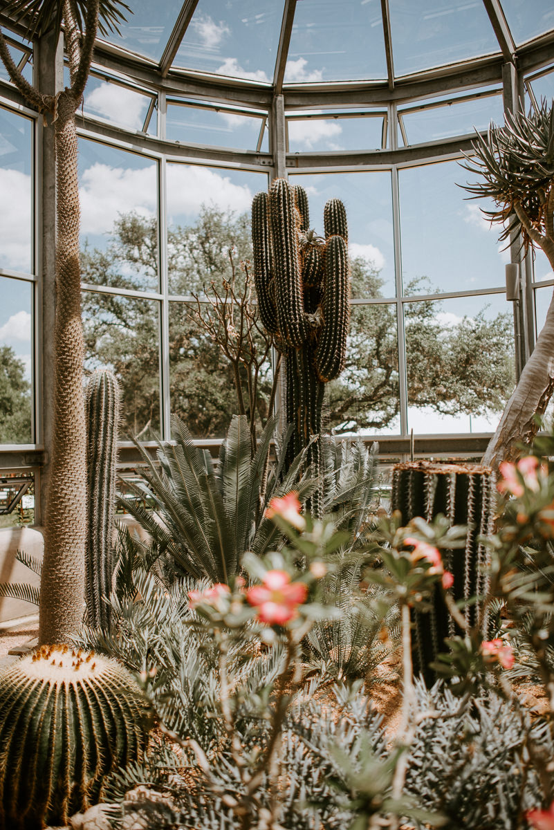 The greenhouse at driftwood cactus