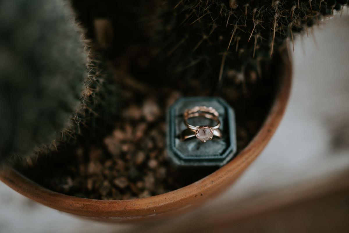 wedding rings in cactus