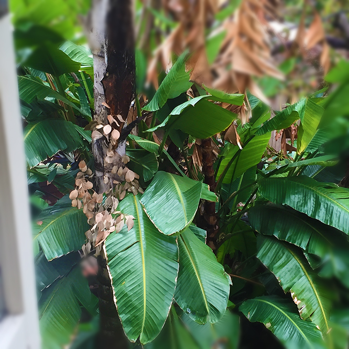 A view of tropical leaves from my window.