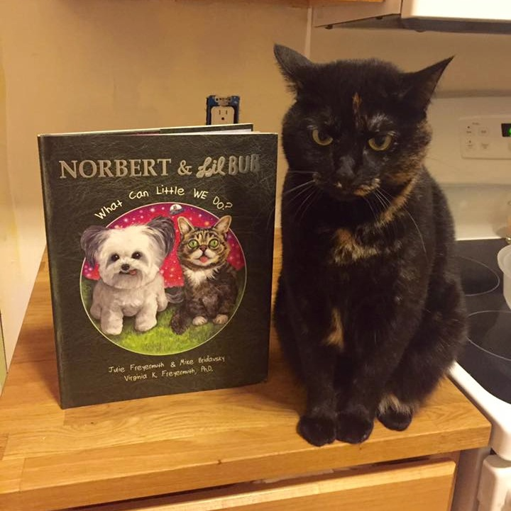Cat and NORBUB Book.jpg