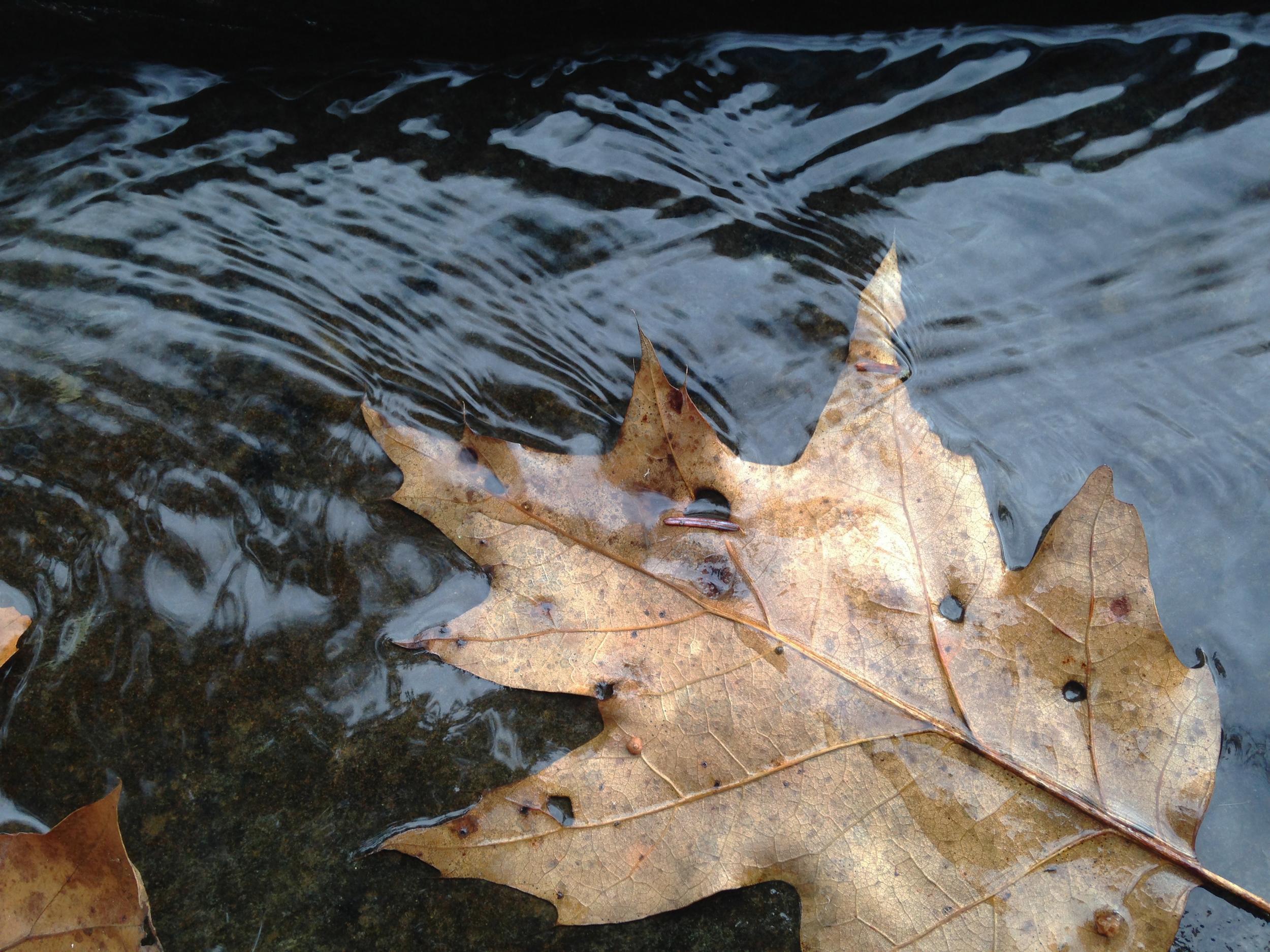 Schoharie, Fall