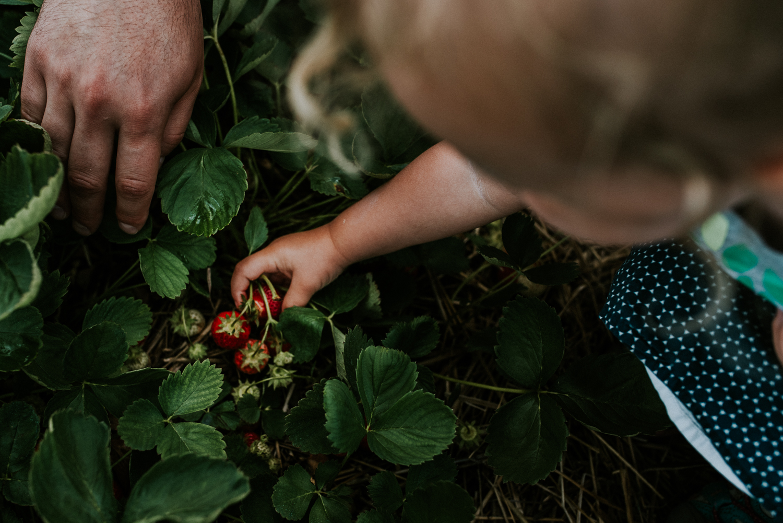 Strawberry Picking-3.jpg