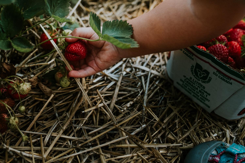 Strawberry Picking-8.jpg