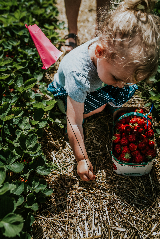 Strawberry Picking-13.jpg