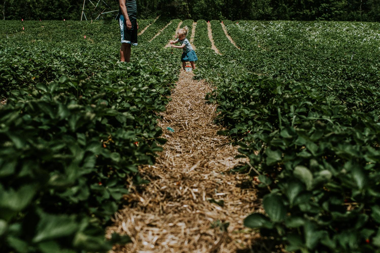 Strawberry Picking-16.jpg