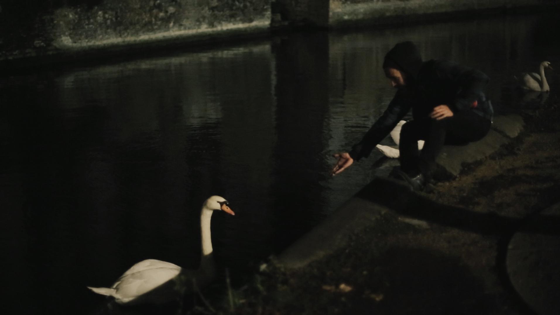 bruges swan