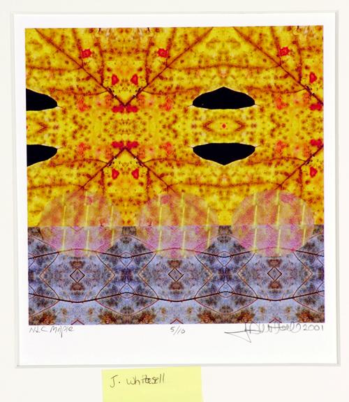 John Whitesell  Natural Leaf Composition, Maple  Inkjet