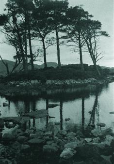 Karen O'Neill  Pines at Loch Assynt  silver gelatin print