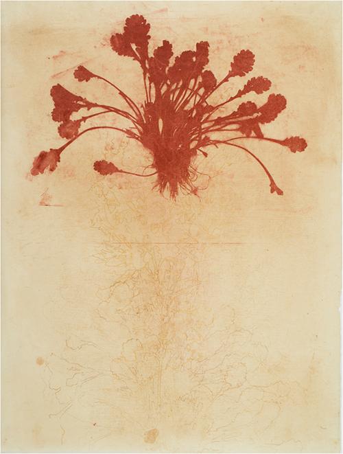 Ellen Price   Cascade II , 2014 monoprint 21 x 16 inches