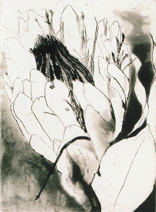 Iris G. Morehouse  Untitled (Flower 2)  intaglio