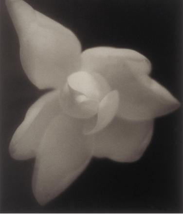 David Nester   Diana Magnolia #42 , 1996 platinum palladium print Courtesy of the artist