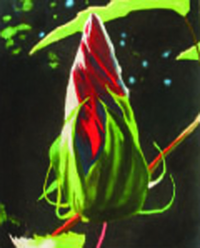Amber Bradley   Hibiscus Blossom at Sunset , 2006 pastel on paper