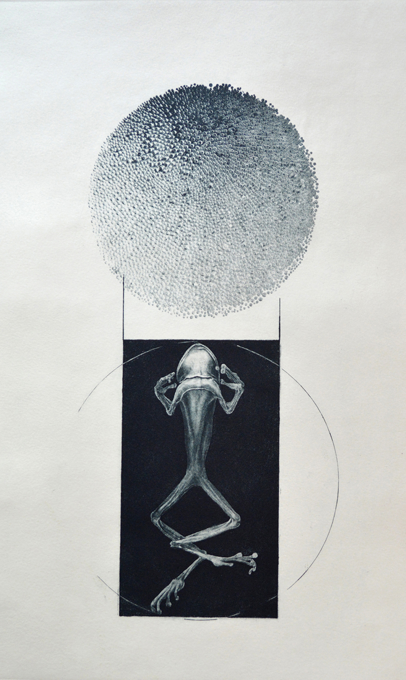 Jenny Freestone   Aqua 1, First State , 2015 direct gravure and photogravure with etching and aquatint 16 x 10 inches