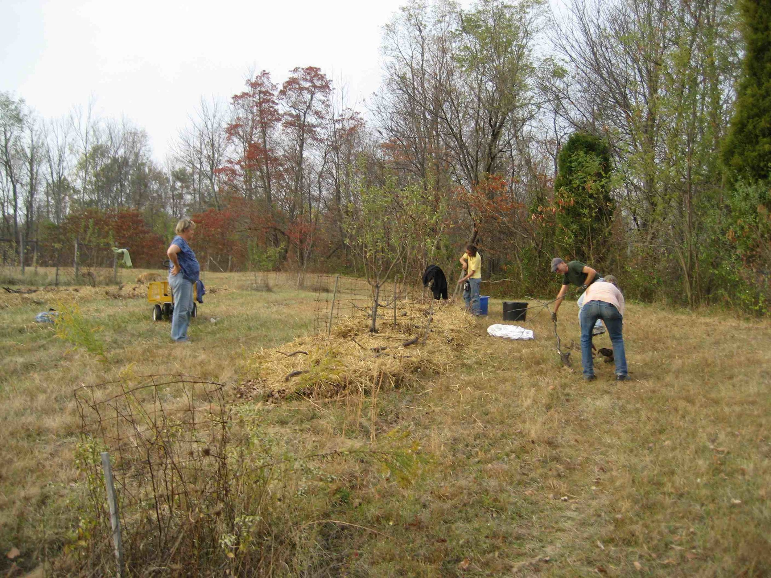 Mulching a permaculture orchard