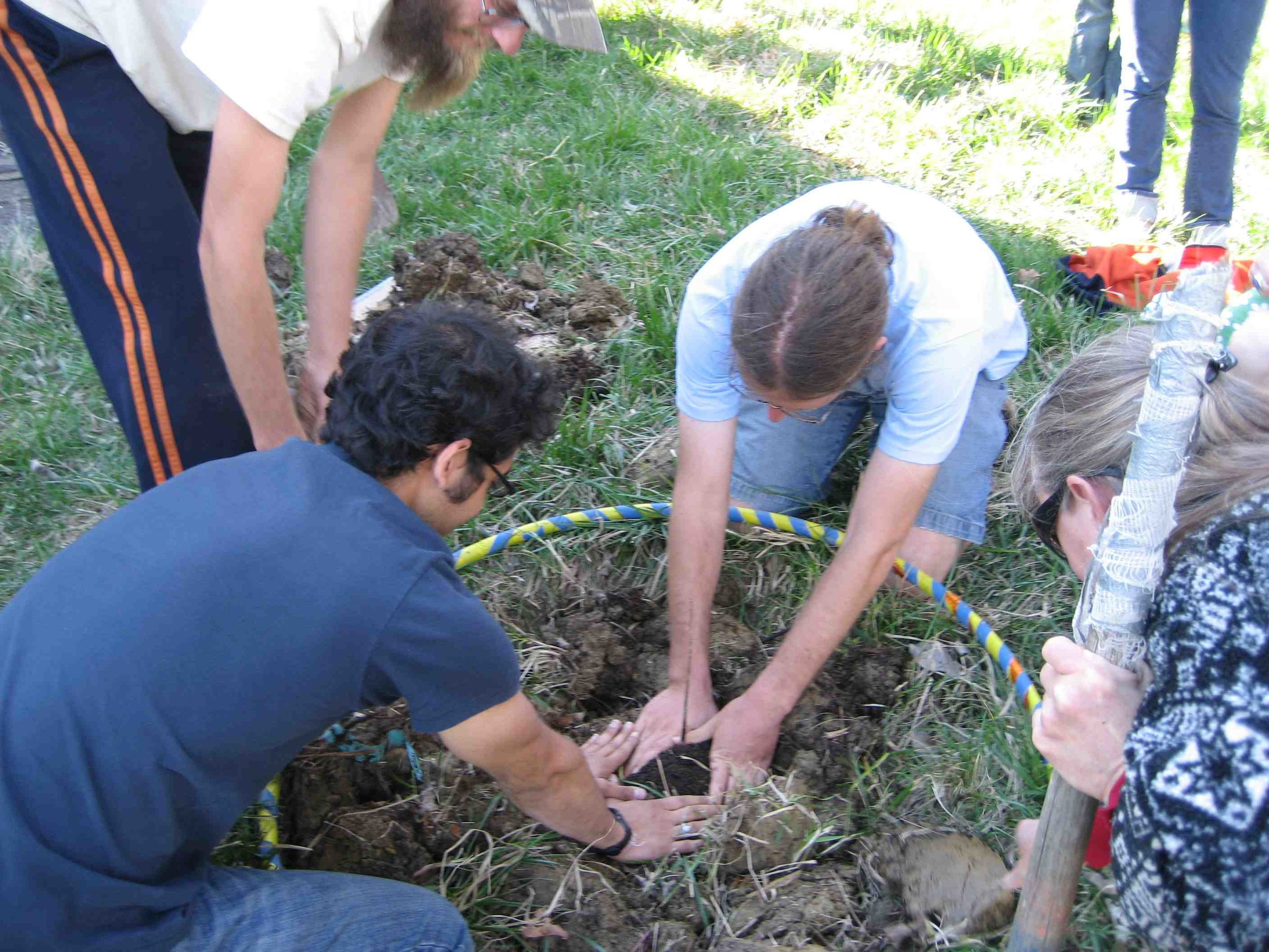 Planting a Northern Pecan for the class tree