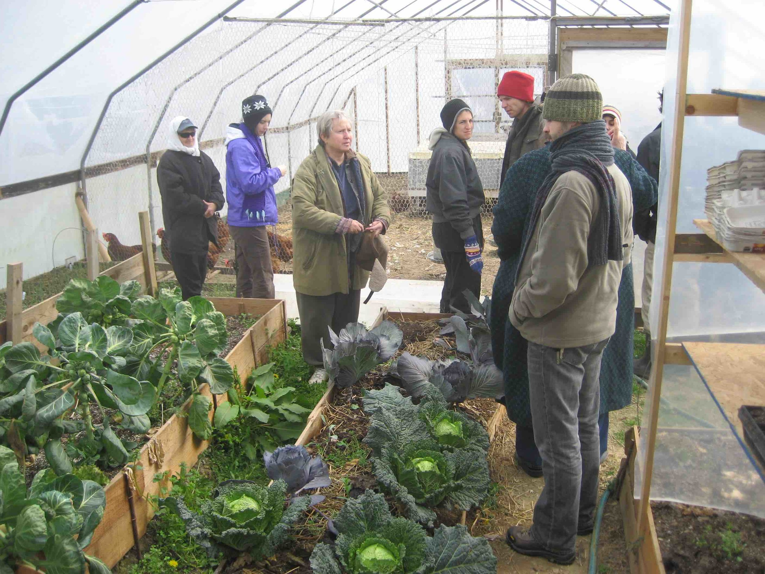 Students learning about Winter Crops at Greensleeves Farm