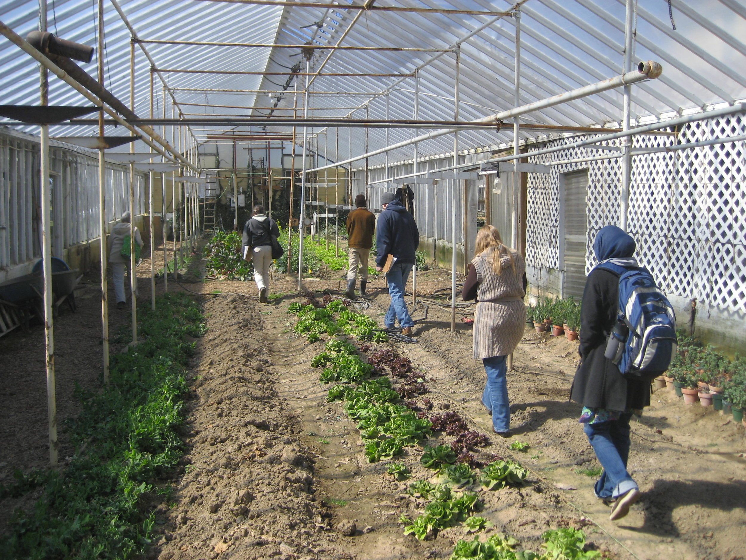 Winter Crops in the Enright Ridge CSA Greenhouse