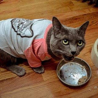 #monster. Again photo credit @_gusponce  Model, a very hungry cat wearing a t-shirt.