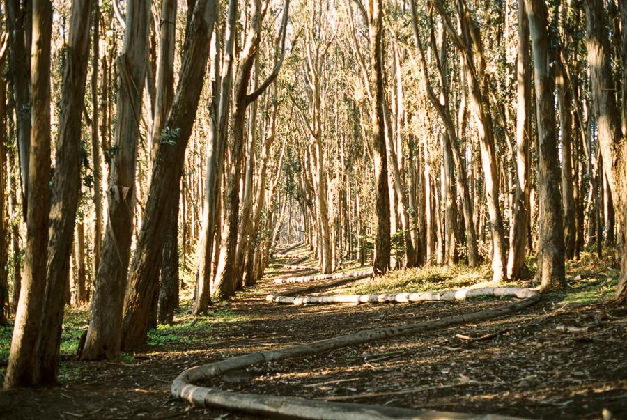 wood-line-3