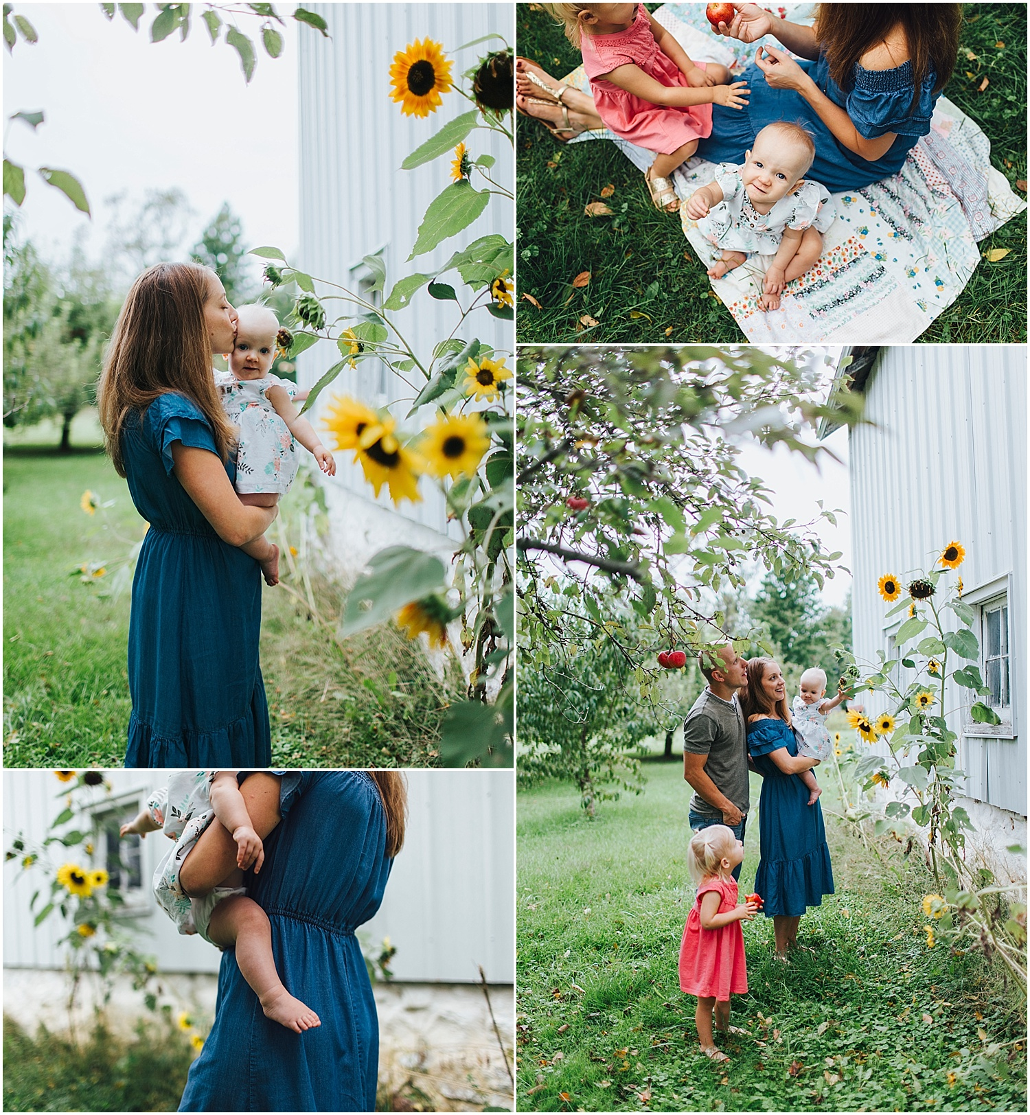 fall family photos by old barn with sunflowers