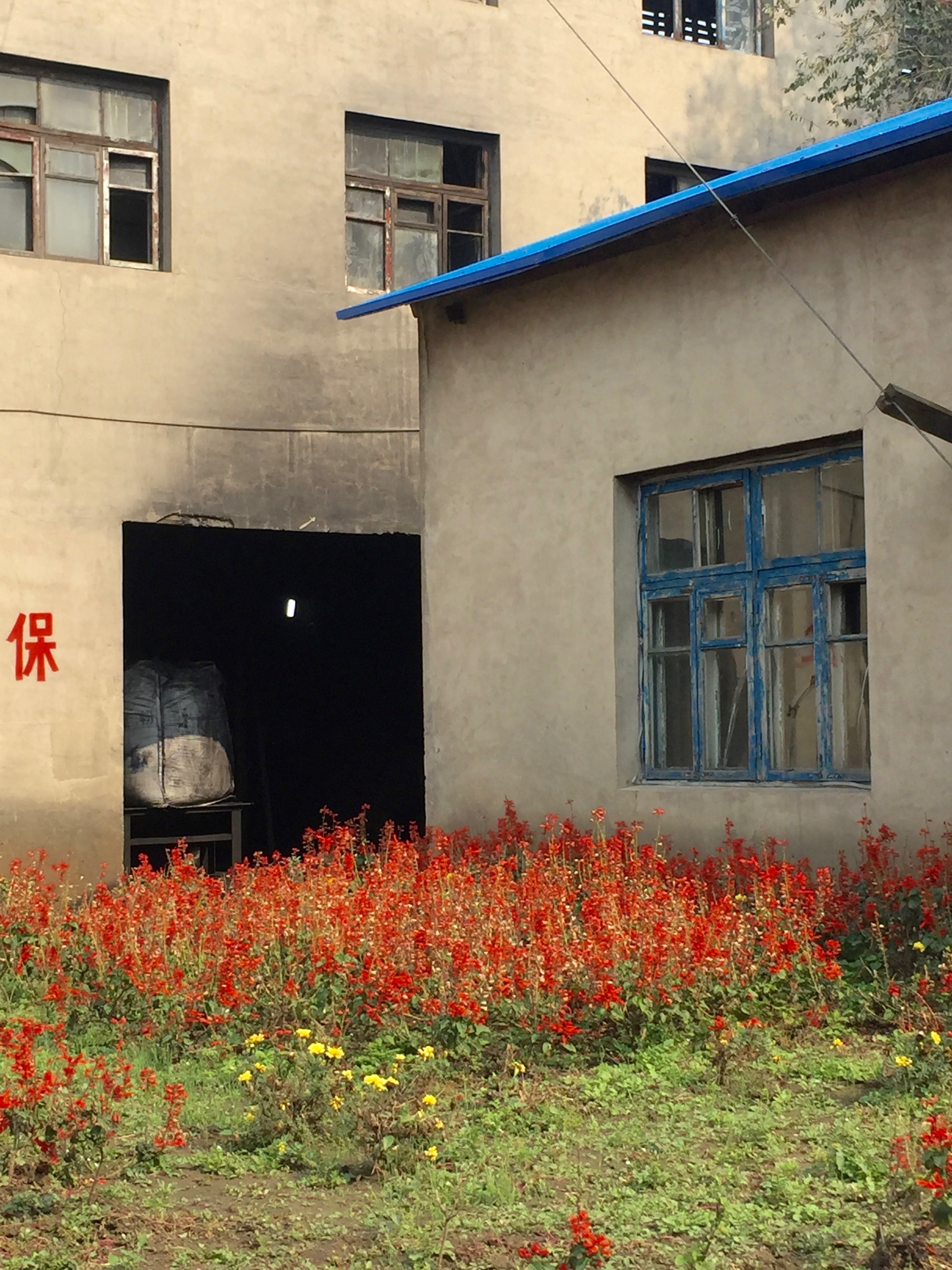 Contrast of the dirty coal room and red flowers.