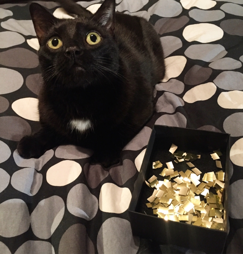 Meow, there! I am Kotik. It's very nice to meet you,Gorgeous! I hope you like it here on our site. Check out my diary  http://www.hellogorge.com/kotiks-diaries/