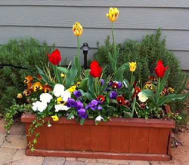 fall planter box tulips
