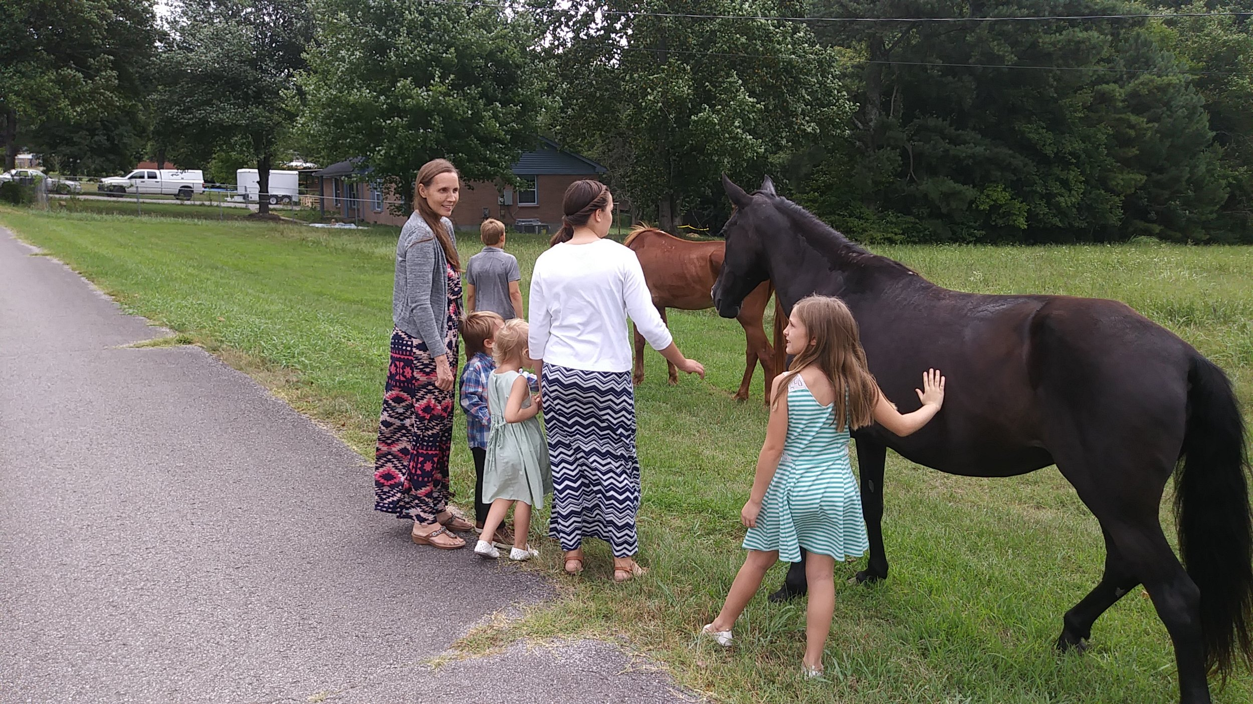 Horse Visit - We came home to horses in our yard. Turns out that Myrtle and Gracie are regular visitors.