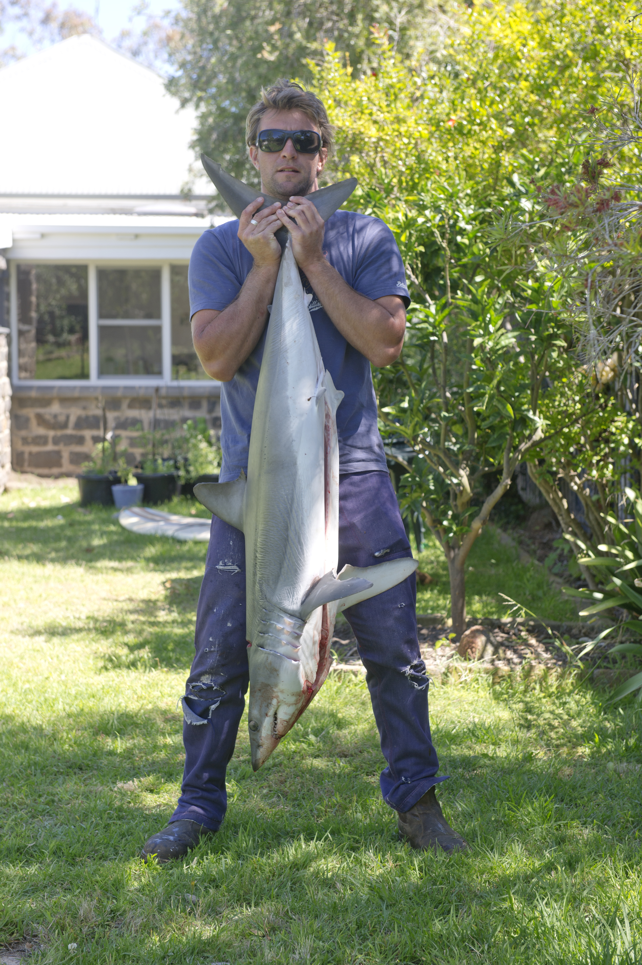 Little Mako shark caught off Torquay