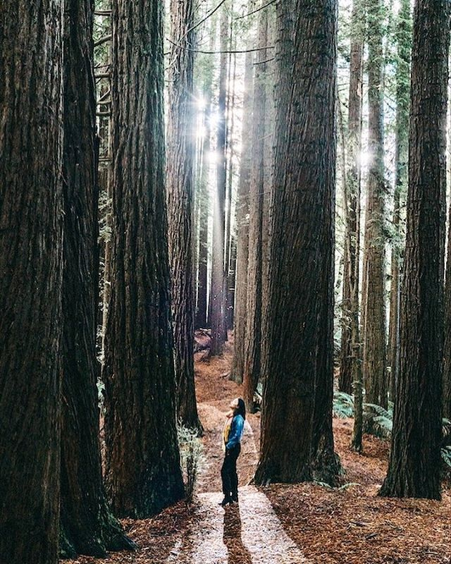 Just had to share this shot we took at the Californian Redwood Forest in...Melbourne! Never thought we'd see something like this outside of Yosemite. 🤯 The trees were so majestic, the mood so tranquil, and the feels of it all left us just breathless. And the light was just otherworldly. Can't wait to shoot here when we come back in August. . . . . #travelwriter #travel #instatravel #travelgram #tourism #passportready #travelblogger #wanderlust #ilovetravel #instatravelling #instavacation #travelblogger #instapassport #travelling #traveltheworld #igtravel #travelblog #travelpics #wanderer #wanderlust #travelphoto #adventure #visiting #travels #travelphotography  #arountheworld #traveler #sonysingapore #adventurephotography