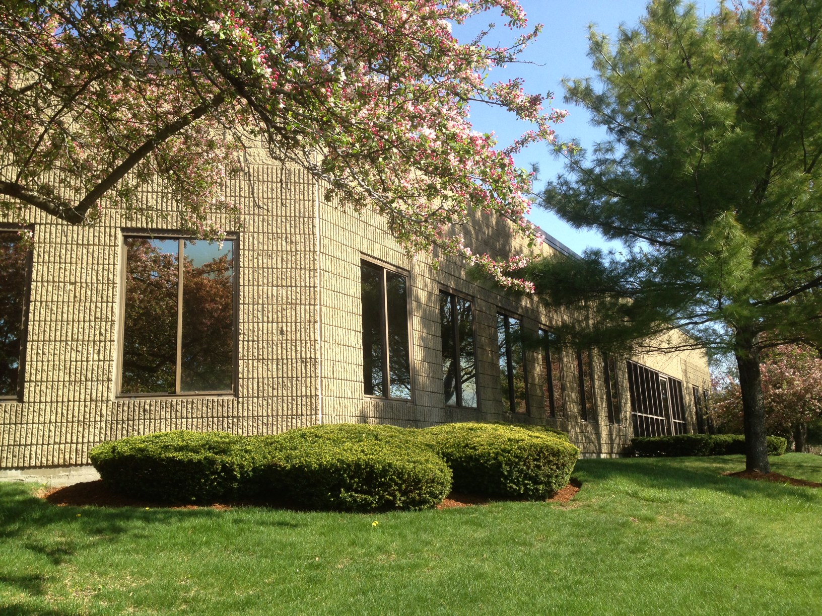 Corner with Pine tree, 5-11-15.jpg
