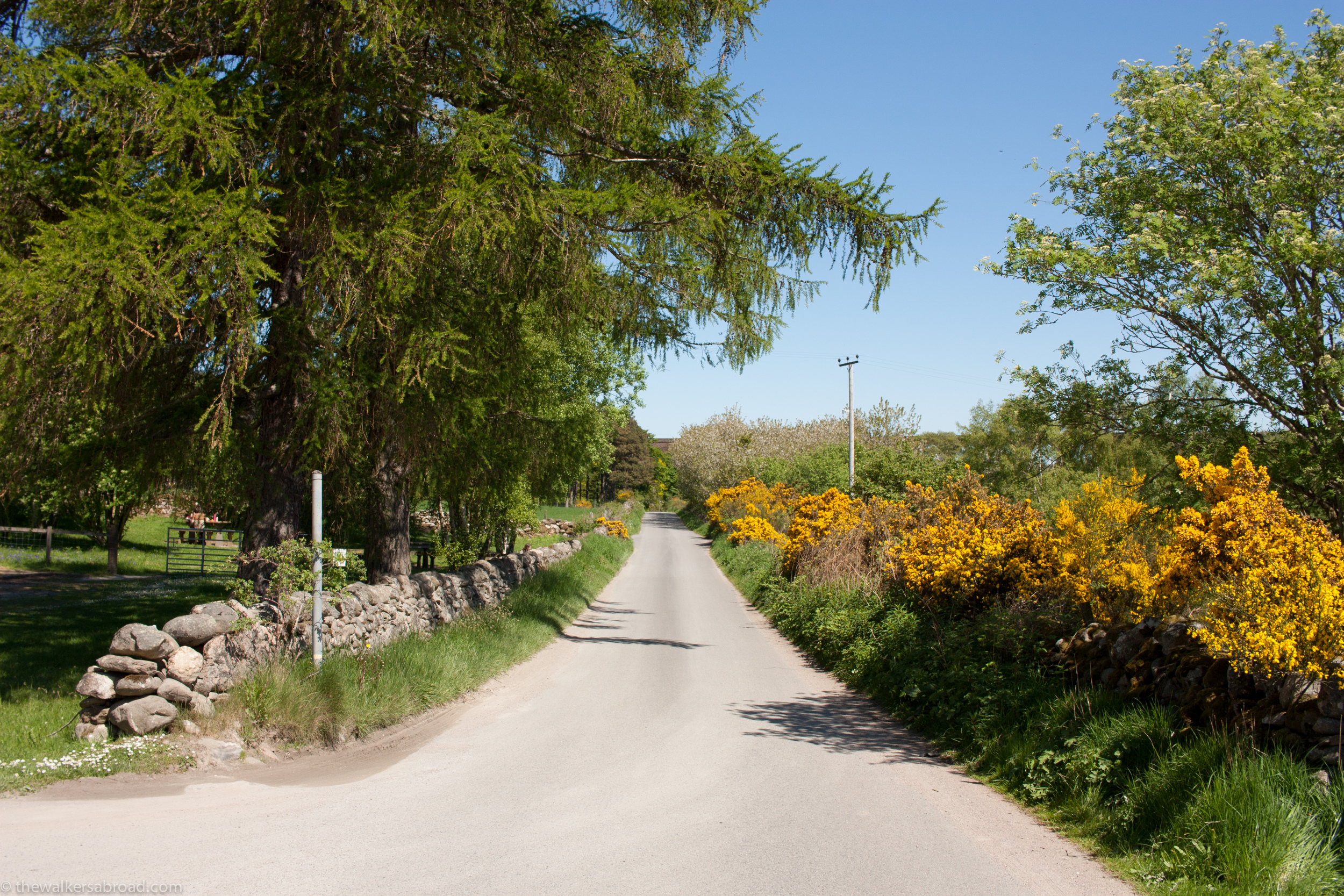 Road leading from the Clava Cairns site. The car park is on the left. Photo by Sarah.