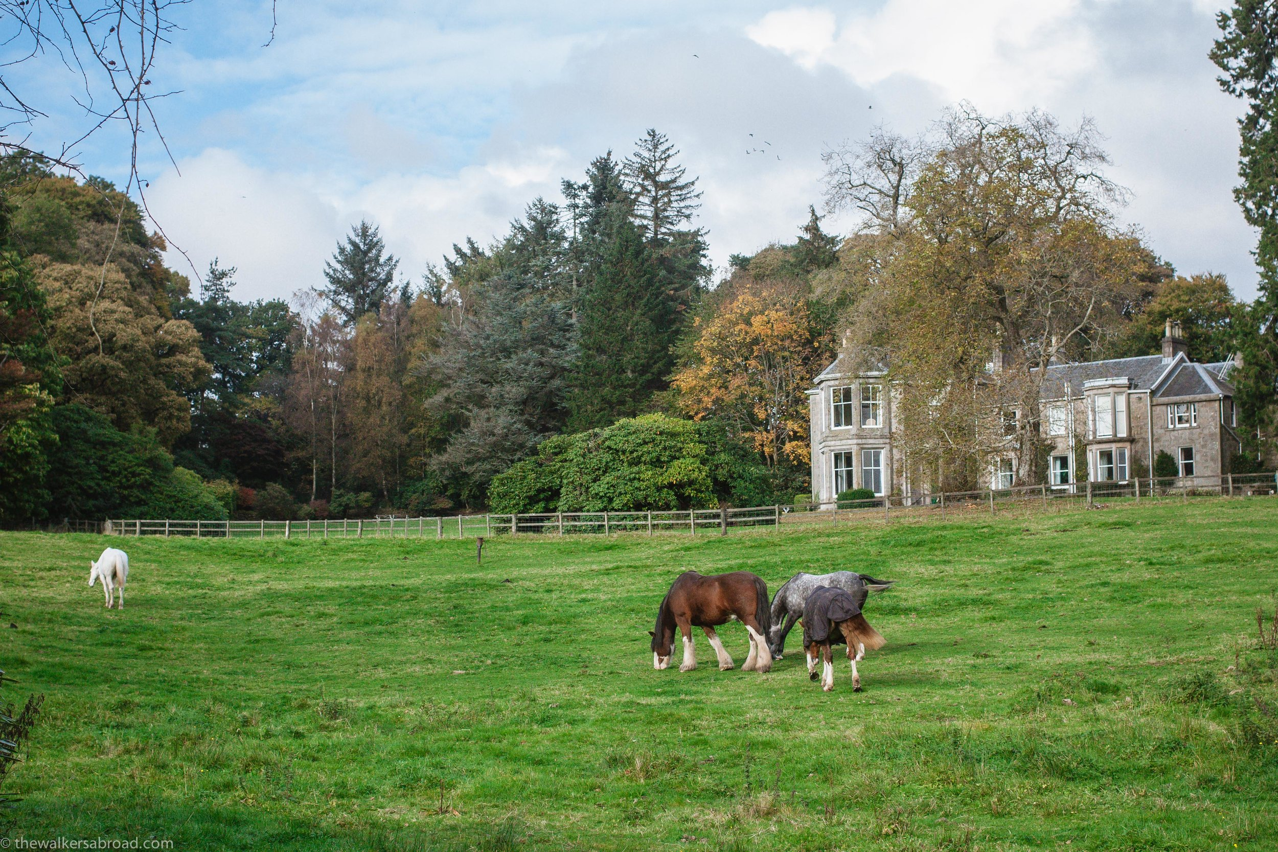 These pictures have nothing to do with communication, but are from a recent walk we had up to the Overtoun House.