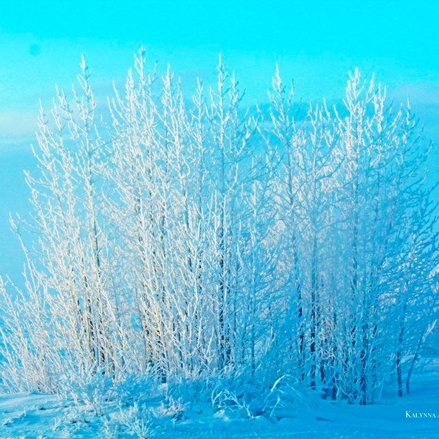 frosty+trees.jpg