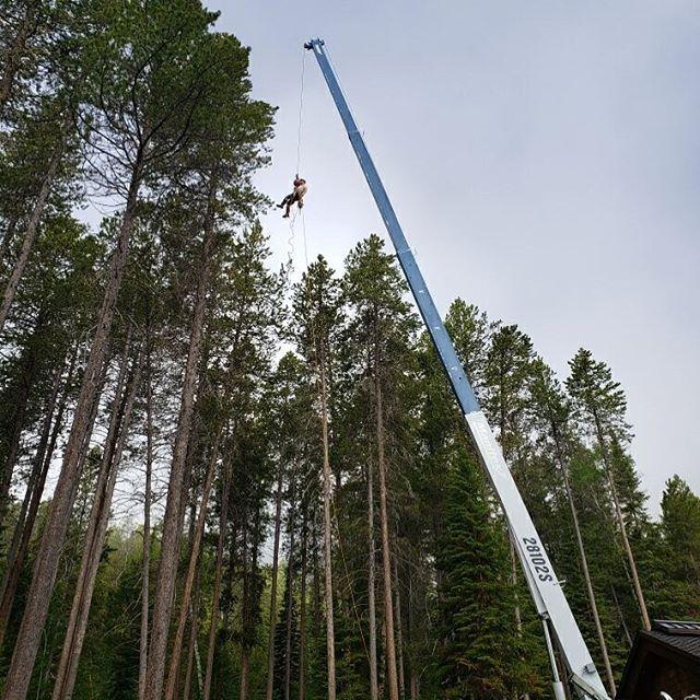 Picking them whole, efficiency at its finest.  #treework  #jharborworks  #jharborist  #crane  #cranework