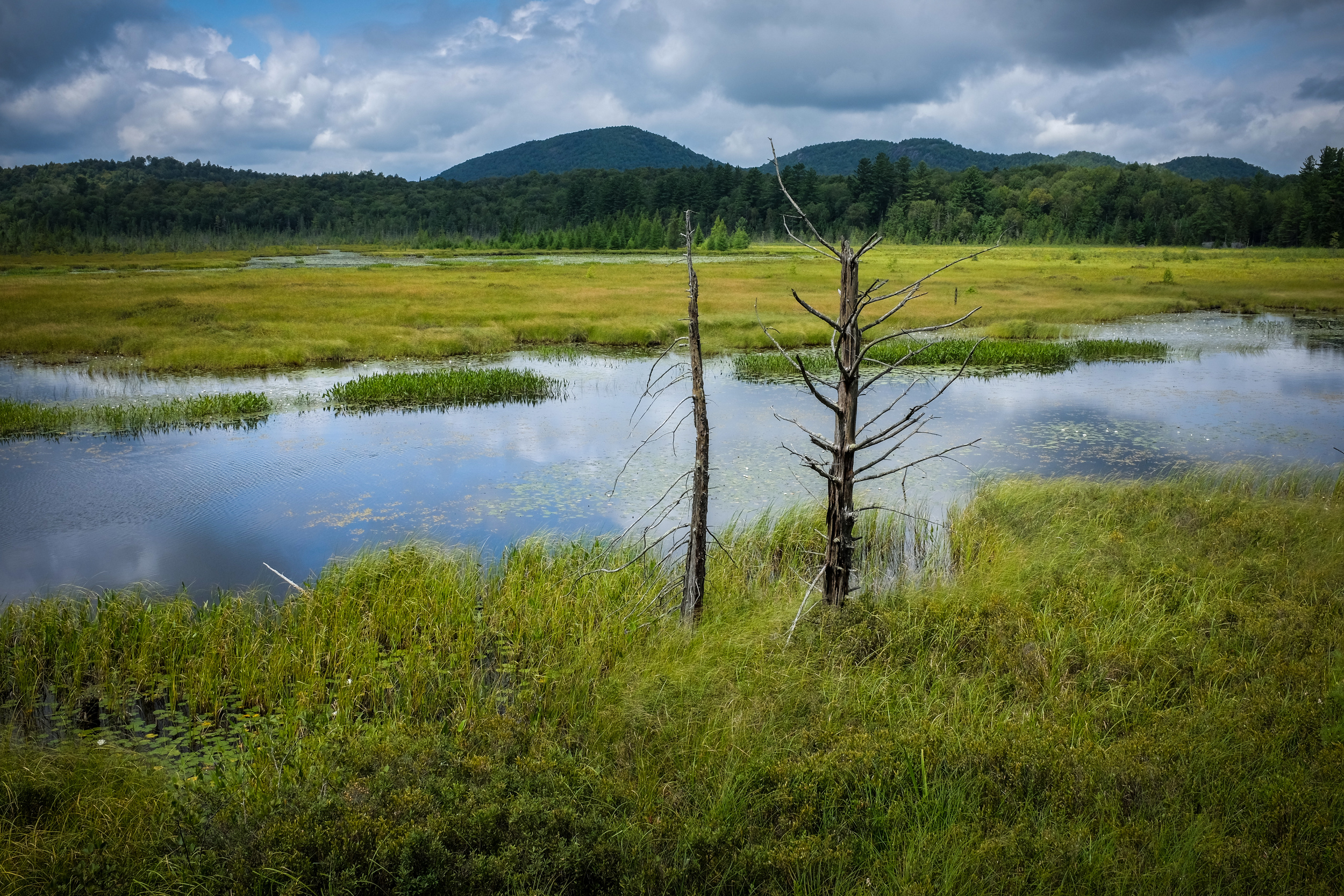 Heron Marsh Trail in the Adirondacks, New York.