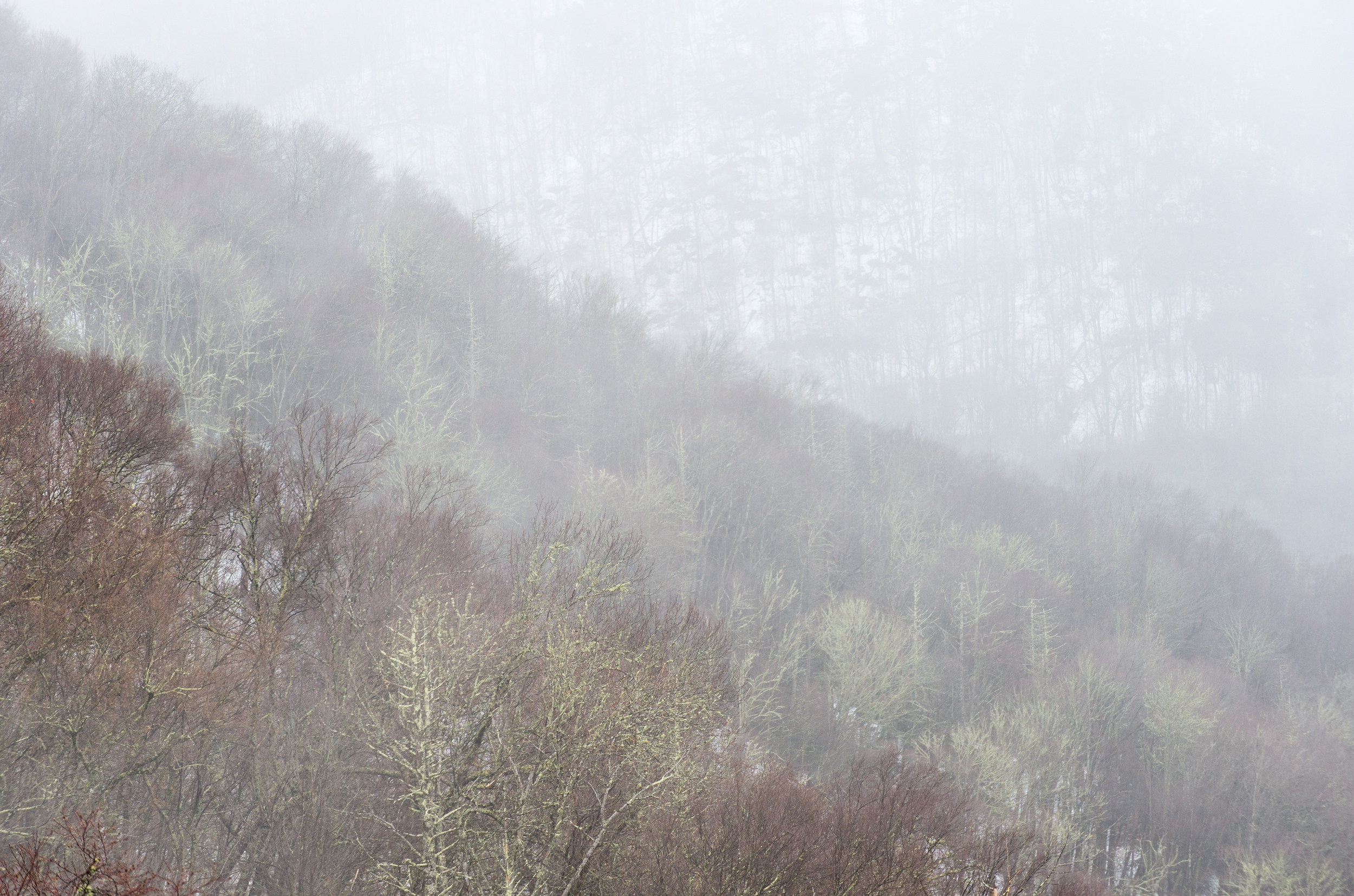 While the clouds blocked any chance of a view from the Newfound Gap overlook, just down the road from the summit there were short glimpses of the mountainside. 1/400 @ f9, ISO 400.