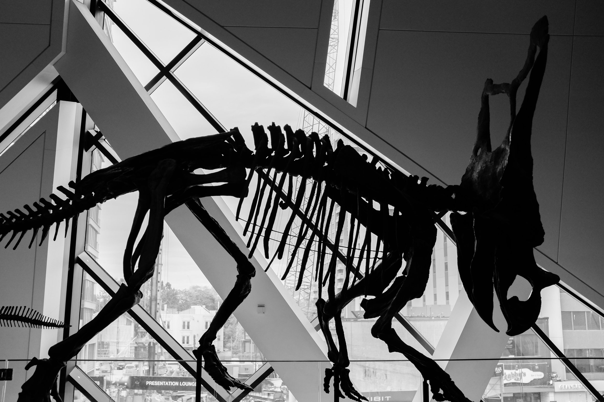 The Royal Ontario Museum located in Toronto, Canada, has a great mixture of exhibits located in a wonderfully designed building. In this photo, I used the straight lines of the windows to contrast with the curved lines of the dinosaur. Choosing to present this as monochrome further emphasizes the patterns. Fujifilm X100S, 1/1250 @f2.8, ISO 800.