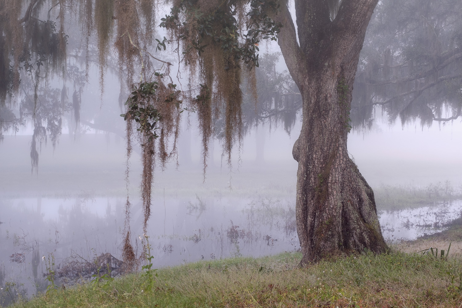 I choose to shoot a little tighter in order to emphasize the Spanish moss hanging from the tree. It's scenes like this that scream for fog. Fujifilm X-Pro2, 50mm, 1/4 @ f11, ISO 200.