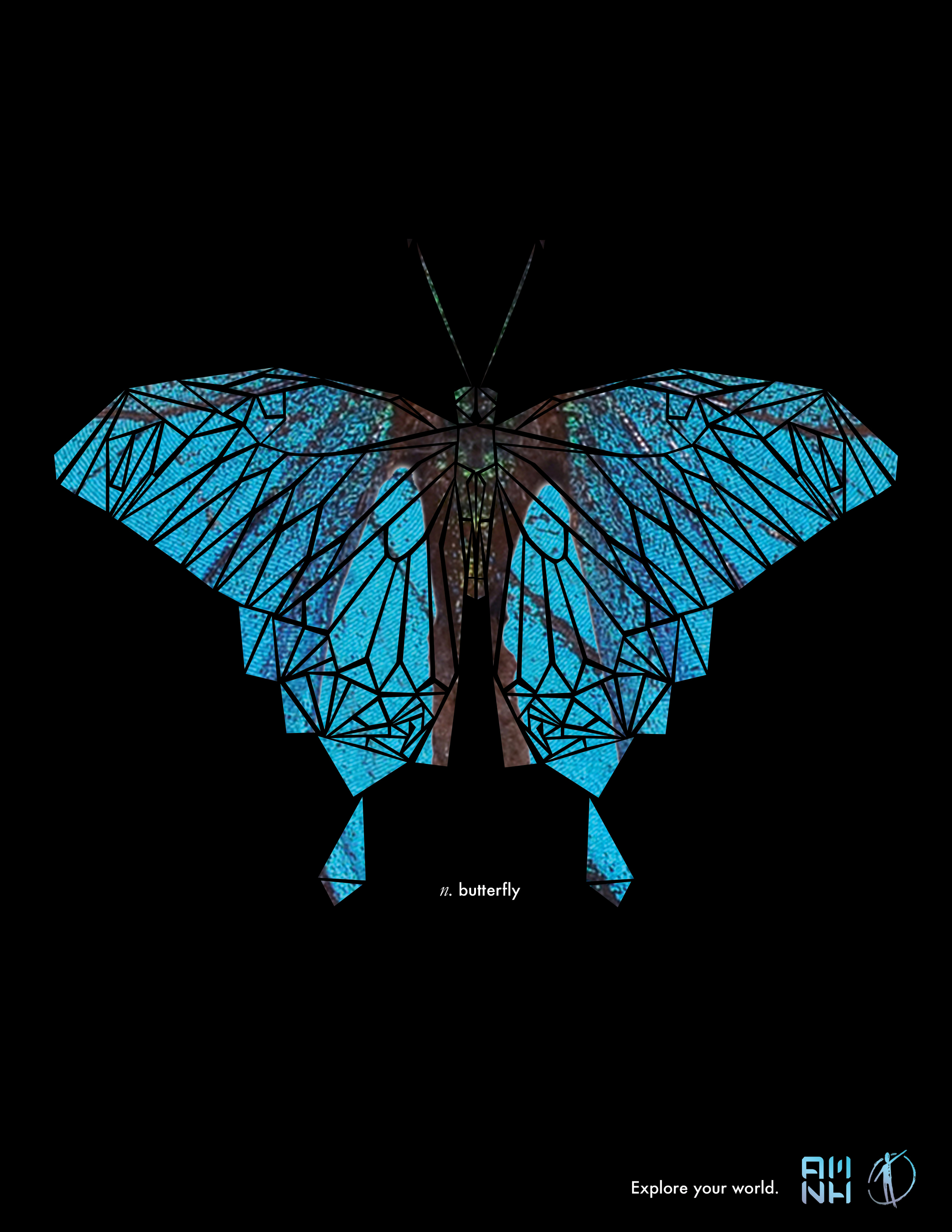 amnh_posters_v2_butterfly.jpg