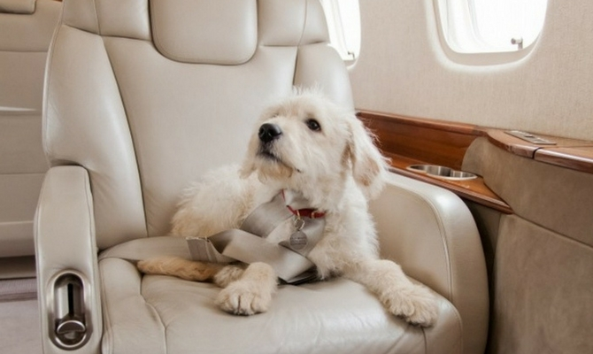 pets-on-jets-privatefly2_670x400.jpg