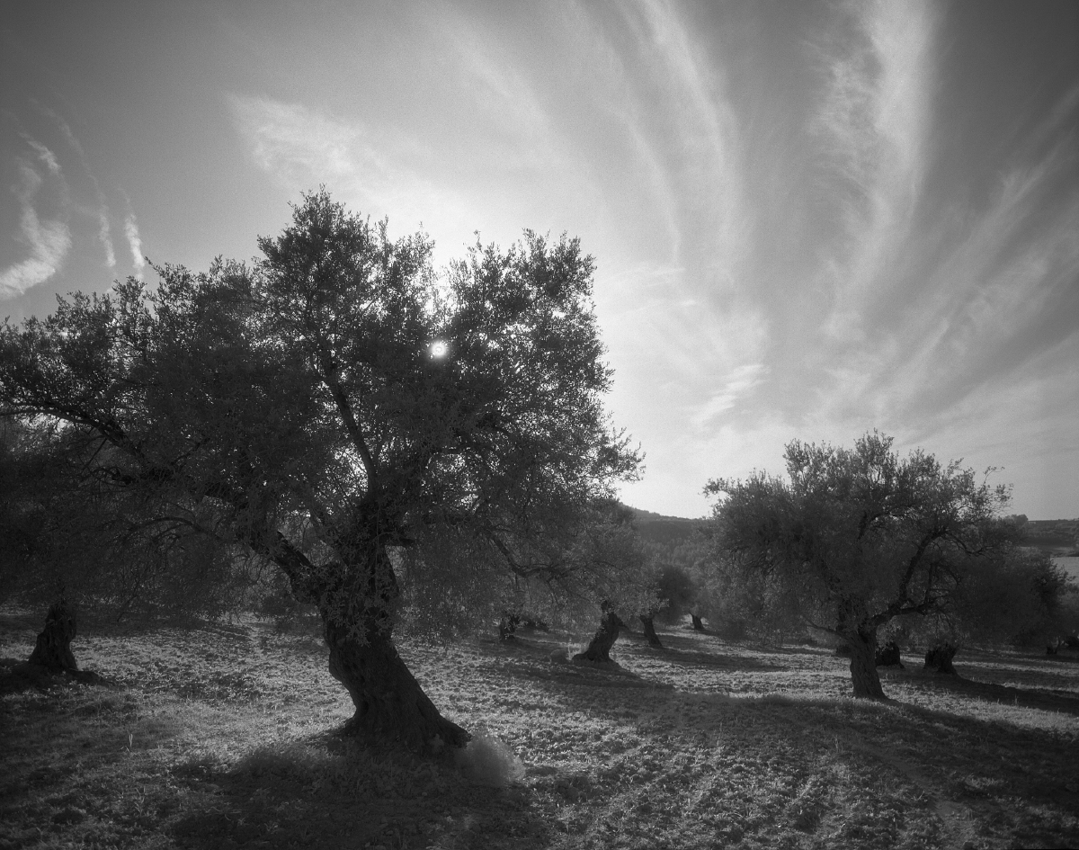israel_05_16