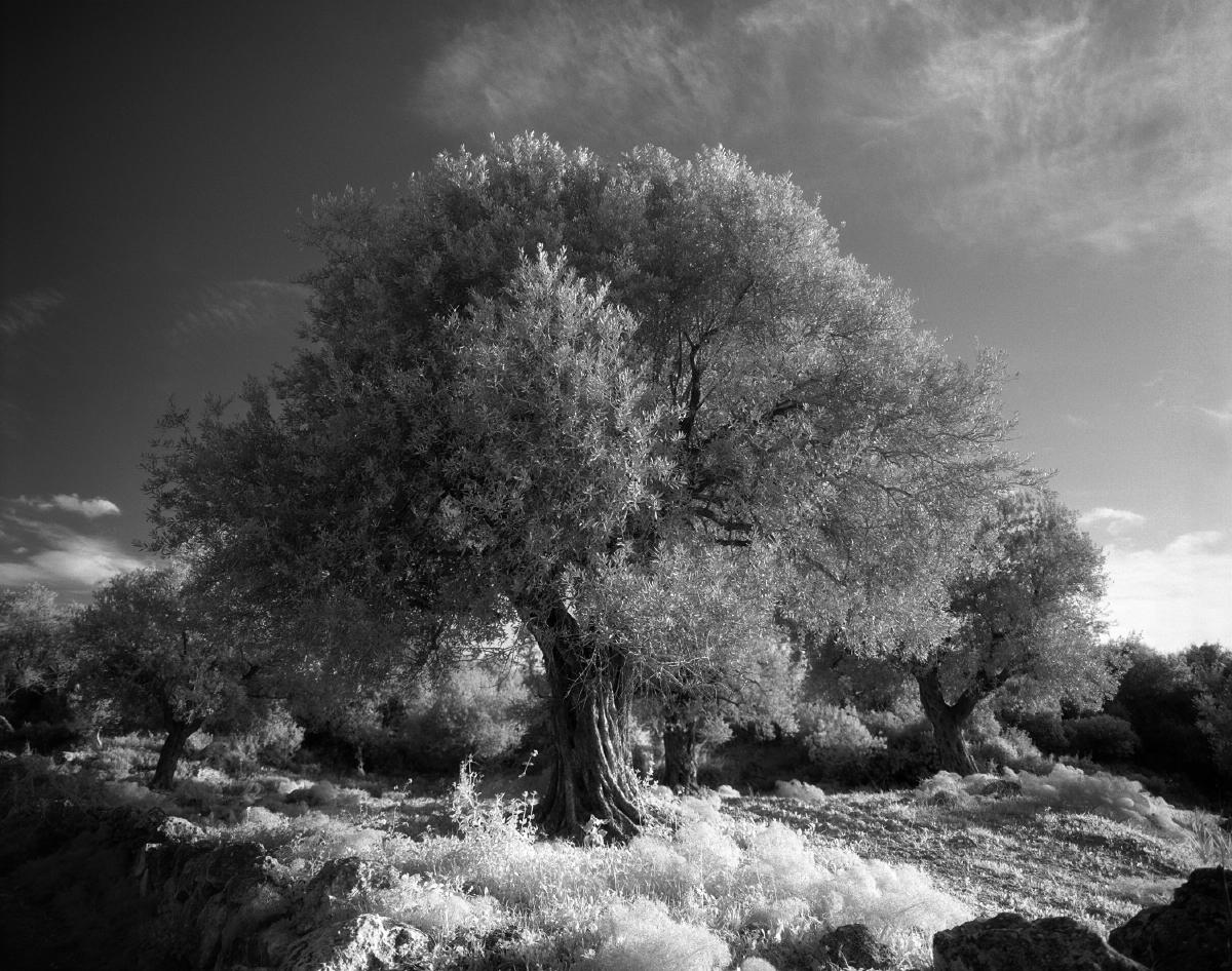israel_08_10
