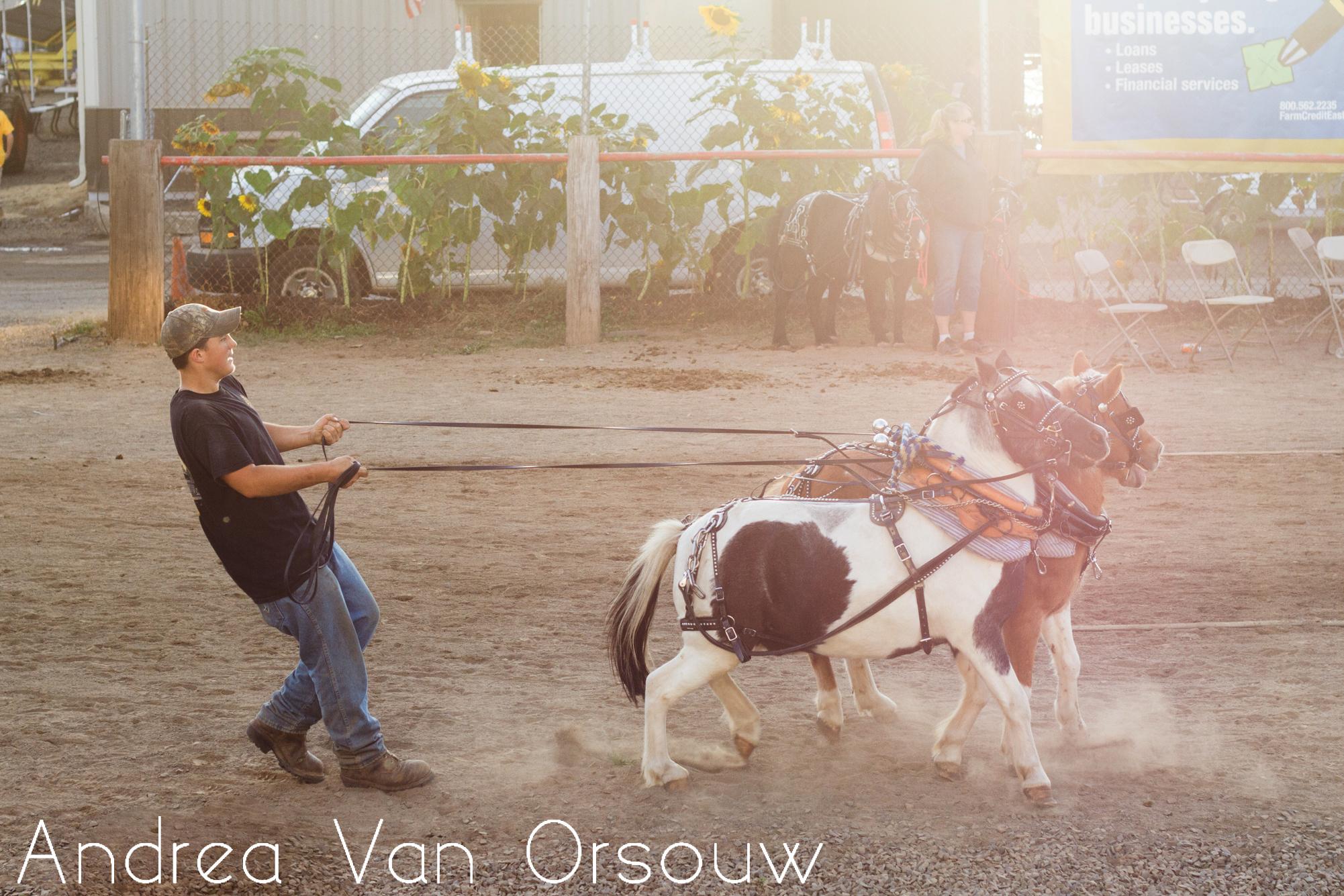 horse_pull_durham_fair.jpg