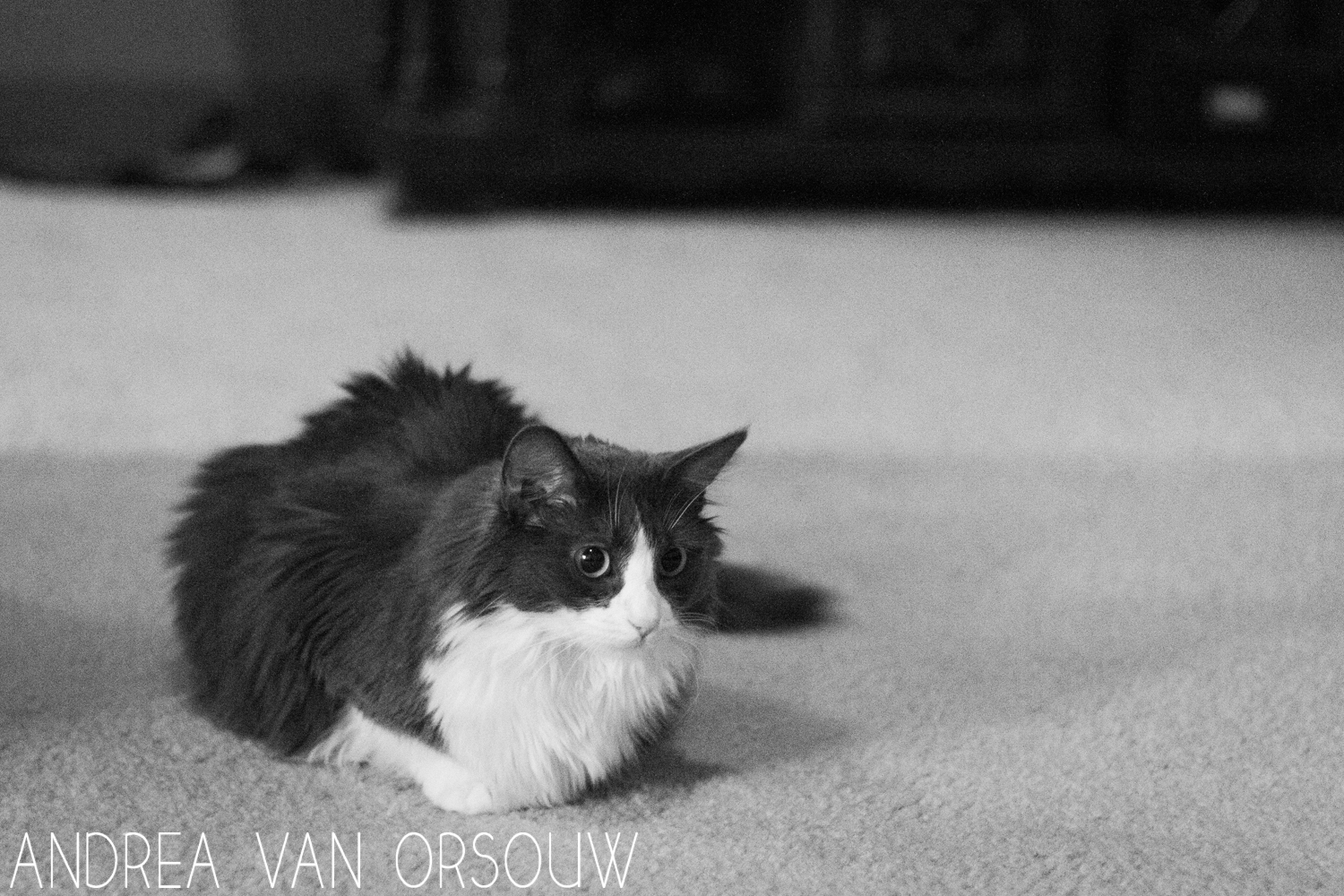 wide_eyed_cat_black_and_white_personal_ctphotographer,jpg