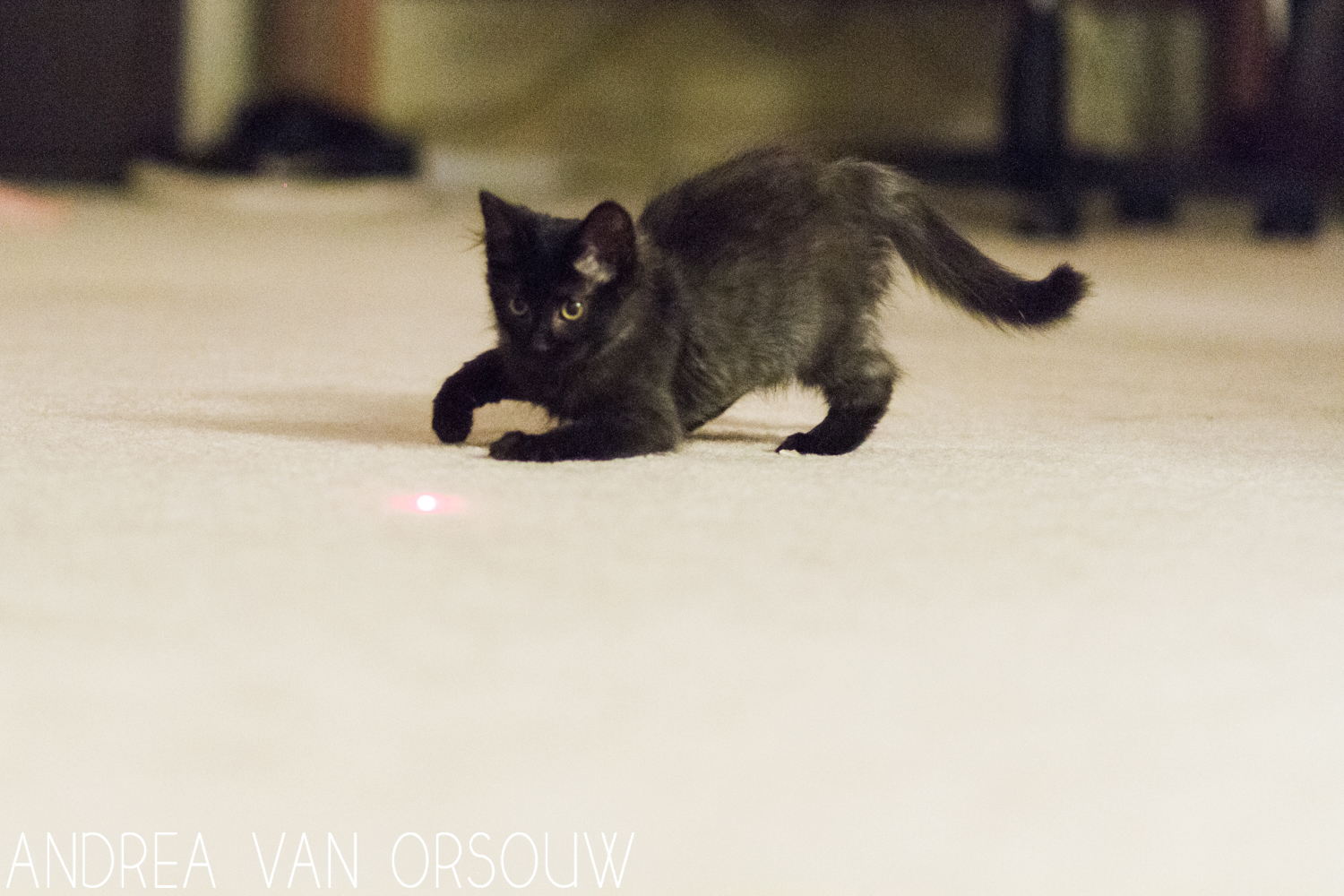laser_pointer_playing.jpg