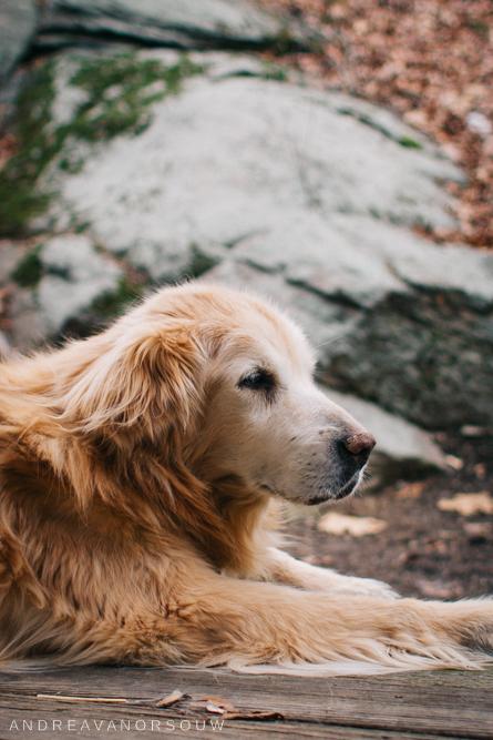 loss_of_pet_dog_elderly_dog_connecticut_photographer_personal.jpg