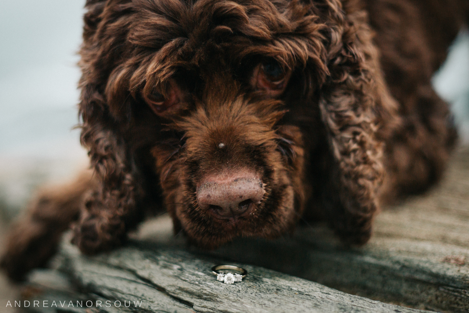 jamestown_rhode_island_Ri_engagement_session_photoshoot_wedding_outdoors_connecticut_wedding_new_england_photographer_ring_dog_puppy.jpg